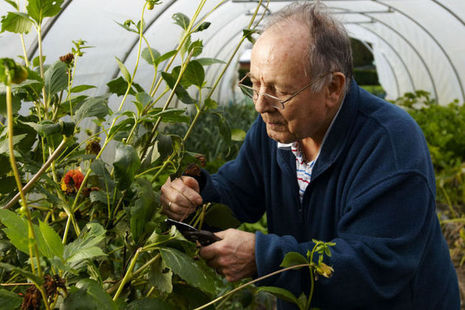 Elderly man tending to a greenhouse