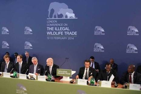 Illegal wildlife conference