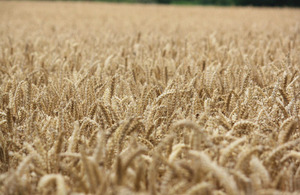 Wheat field (Andrew Wilkinson / CC BY-SA 2.0)