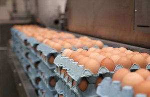 Eggs on trays