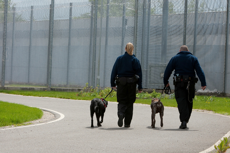 Prison officers with dogs