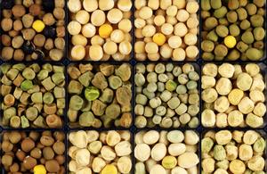 legume seed bank