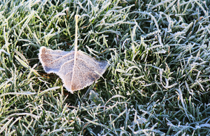 A frosty leaf on grass.