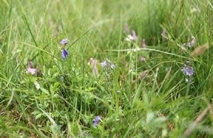 Wild flowers on Rampisham Down, Dorset