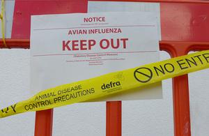 Avian influenza outbreak image