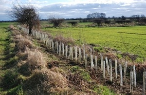 Gapped up hedgerow