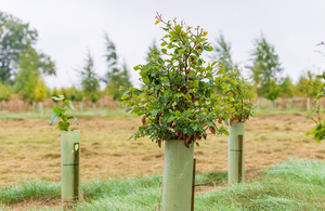 New trees and shrubs are to be planted along the HS2 route