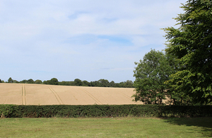 Photograph of a field after cutting