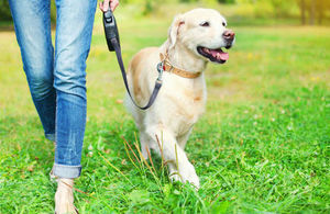 a dog on a lead