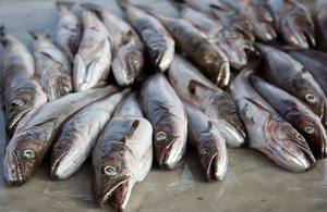 Cod fish - a quota species