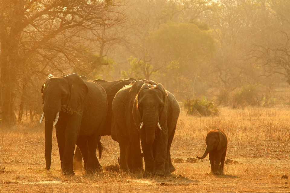 Global momentum to the ivory trade: article by Boris Johnson