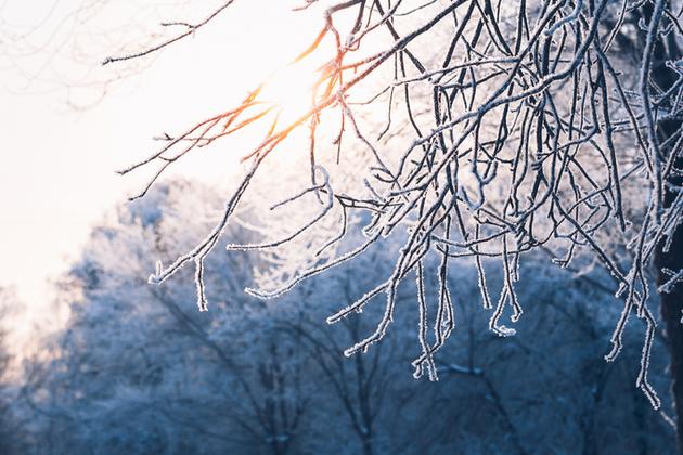 January landscape winter
