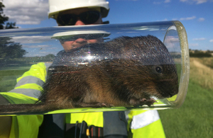 Image showing water vole being released into its new environment