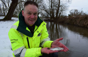 The Environment Agency has released thousands of fish into rivers in the North East