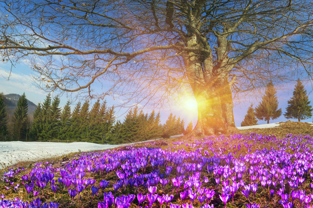 Sunny winter landscape with flowers