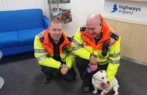 rescued terrier