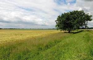 Tree in farmland