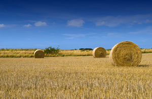 three round hay bales in a field with a blue sky