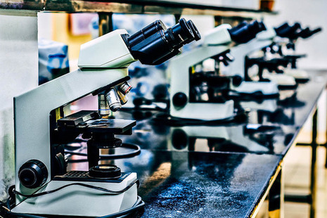 Microscopes lined up on a laboratory bench
