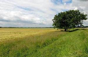 Image of a rural scene - a field and a tree in the foreground with a cloudy sky