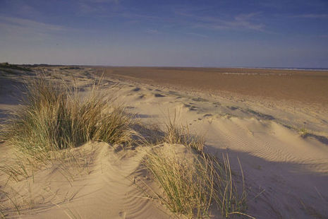 Sand dunes and beach at Saltfleetby, Lincolnshire