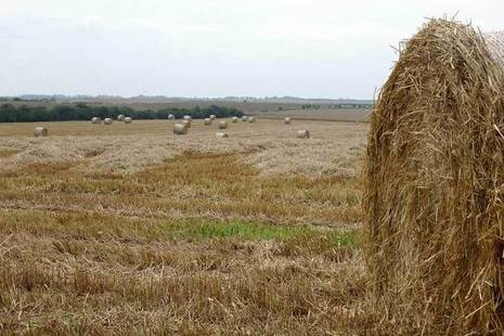Straw bales in harvested field