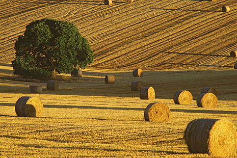 Photograph of crops in field