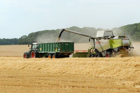 Combine harvester collecting crops