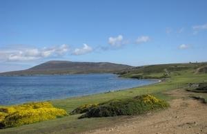 Falklands competition