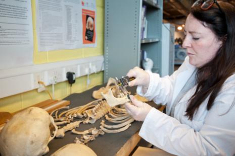 Scientist inspecting bones