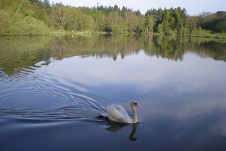 A swan on Stover Lake