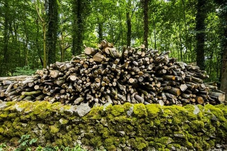 Timber stack in woodland
