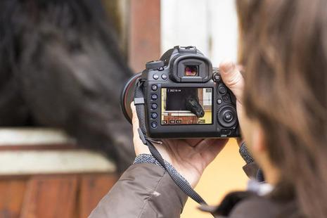 horse camera