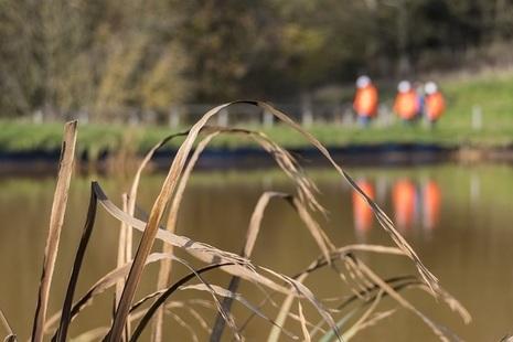 Reeds near water