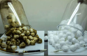 Shows the effects on cotton balls of smoking cigarettes to encourage smokers to quit.