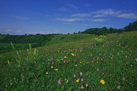 Rural image for Countryside Stewardship