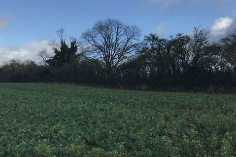 Field with a boundary hedge
