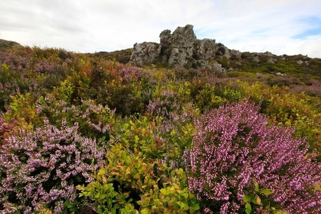 Heathland and rock formation at Stiperstones National Nature Reserve