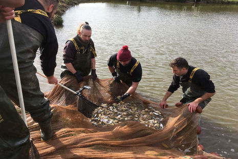 Staff from the National Fish Farm at Calverton in Nottinghamshire standing in shallow water with a net full of fish