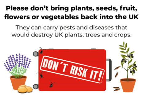 Don't Risk It campaign image, featuring a suitcase with beetles on, a lavender plant and olive tree