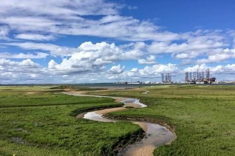 Stream flowing through salt marsh towards Tees Estuary