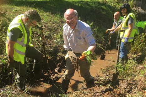 Lord Gardiner digging out American skunk cabbage