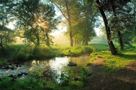 A river running through trees with sun shining through the trees and on the surface of the river