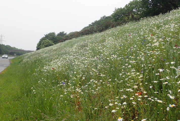 Flowers on the A38 verge