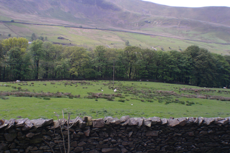 Knipe's Farm view - Stone wall fields and hills