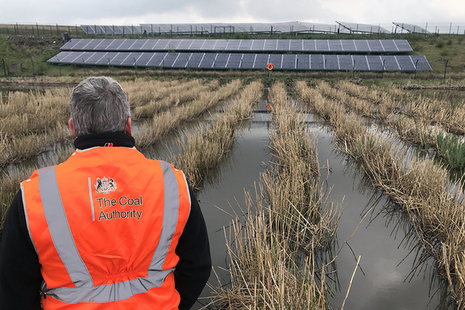 Inspecting the reeds at Deerplay mine water treatment scheme.