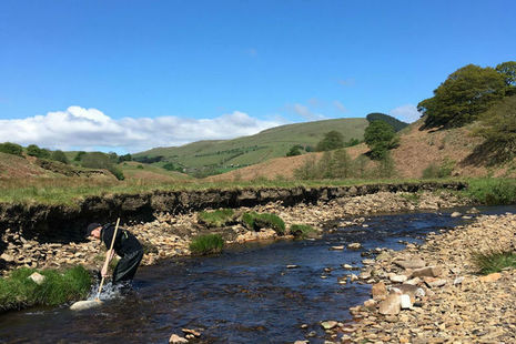 An Environment Agency officer wading in a stream to conduct sampling holding a net with grasslands and hills in the background
