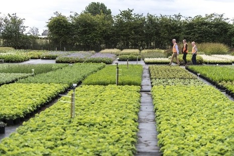 Three men in high vis jackets walking in the distance, surrounded by nursery plants.
