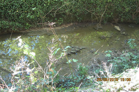 Grendon Brook following pollution incident