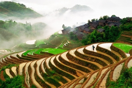 Work with China to transform food production: apply for funding